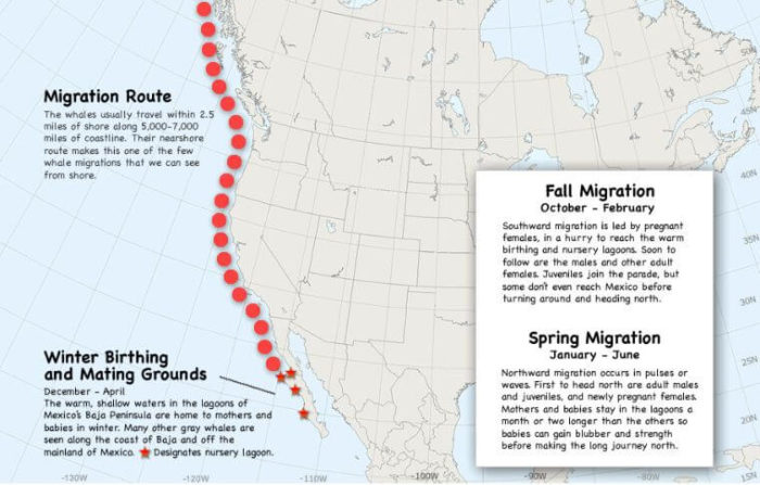 Migration route of Gray Whales
